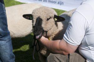 Landbouwshow Opmeer 2015